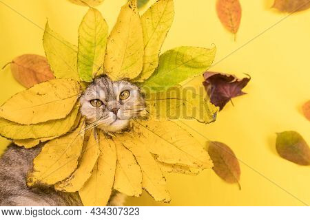 Funny Cat In A Hat Made Of Colorful Autumn Leaves On A Yellow Background With Tree Leaves. A Cat Is