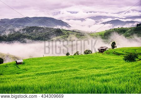 Scenery Of The Terraced Rice Fields With Morning Mist At Ban Pa Pong Piang In Chiang Mai, Thailand.
