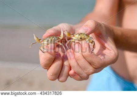 Two Small Crabs From The Black Sea In The Hands Of A Tourist Close-up. Selective Focus On The Right