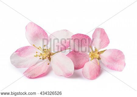 Apple Flowers  Isolated On A White Background
