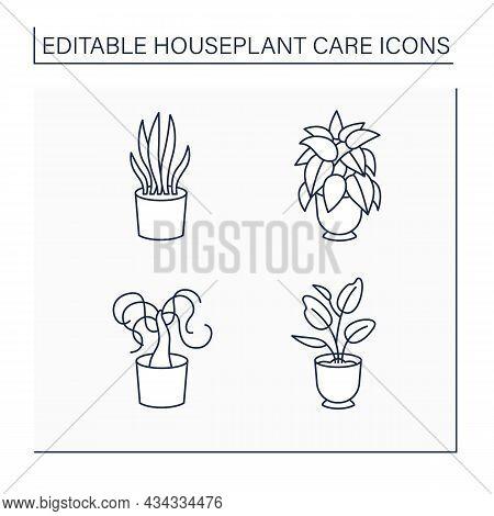 Houseplants Care Line Icons Set.sansevieria Trifasciata, Dieffenbachia, Beaucarnea Recurvata, Ficus