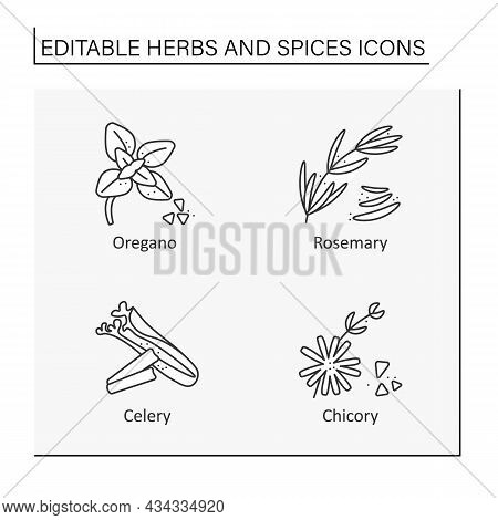 Herbs And Line Icons Set. Different Types Of Seasoning. Oregano, Rosemary, Celery, Chicory.food Prep