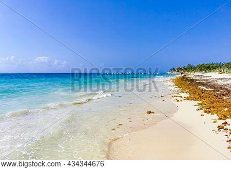 Red Seaweed Sargazo Beach Punta Esmeralda Playa Del Carmen Mexico.