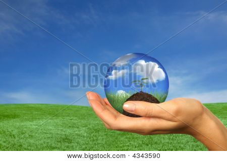 Seedling Sprouting In A Womans Hand