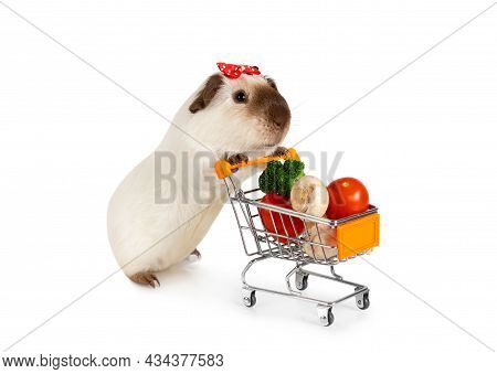 Sweet Guinea Pig Carries Shopping Cart Full Of Vegetables Isolated On A White Background