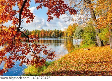 Oak Tree In Autumn Foliage In Catherine Park, Pushkin, Saint Petersburg, Russia