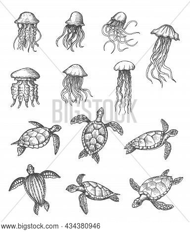 Ocean Jellyfish And Sea Turtles Sketch, Marine Animals Vector Hand Drawn Icons. Sea And Ocean Underw