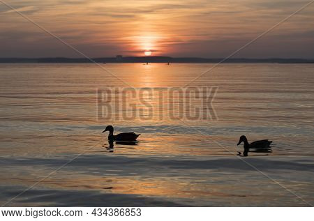 Lake During Summer Sunset And Beautiful Evening Sky. Ducks On The Forest Lake