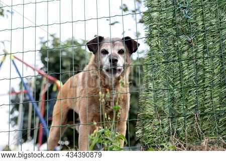 Threatening dog behind a fence defending its territory