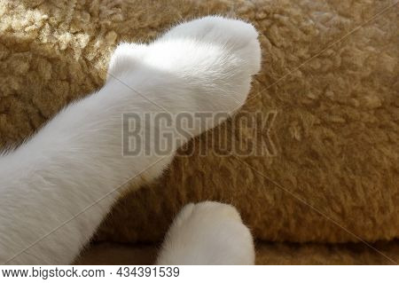 Cat Paw On The Cushion. Tabby Cat Putting It's Paws And Claws On The Cushion Or Cat Bed. Happy Cat R