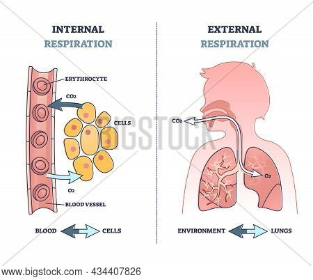 Internal Vs External Respiration System With Air Exchange Outline Diagram. Labeled Educational Breat
