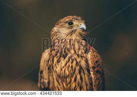 Portrait of a Gorgeous Wild Bird over Soft Focus Background. Wild Animal. Beautiful Eagle in the Wild. Lebanon.