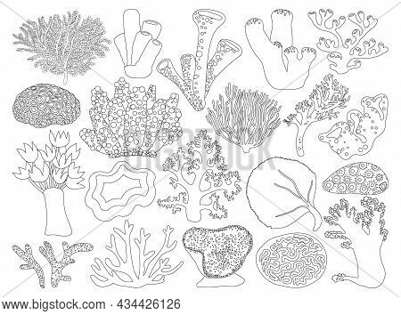 Sea Coral Vector Illustration On White Background. Vector Outline Set Icon Seaweed. Isolated Outline