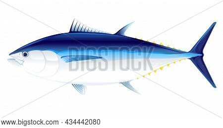 Bluefin Tuna Fish In Side View Illustration