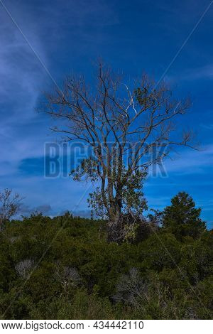 View Of A Swaying Tree From The Life Of The Marsh Trail, Looping Around A Bayside Marsh Habitat In A