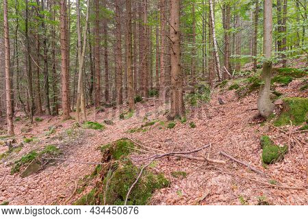 Karkonosze Mountains In Poland. The Slope Of The Mountain Is Covered With High Spruce Forest. A Laye