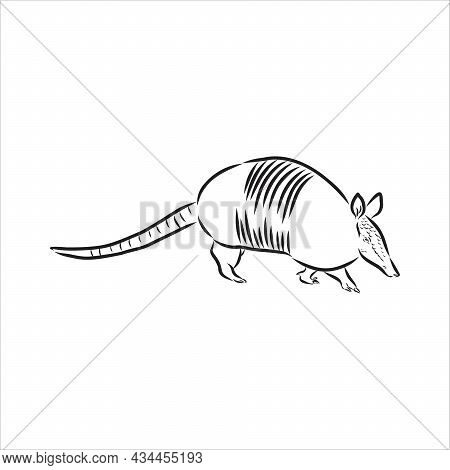 Armadillo Parrot Polygonal Lines Illustration. Abstract Vector Armadillo On The White Background
