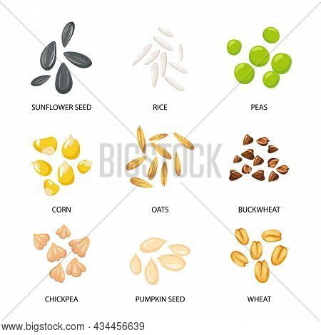 Plant Seeds, Cereal Grains Set. Vector Illustrations Of Collection With Inscriptions. Planting Seedl