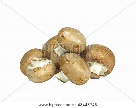 Isolated Brown Edible Mushroom