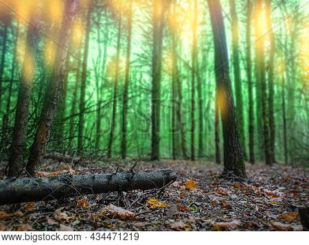 Mysterious Surreal Light In Foggy Forest. Lovely Fairytale In Magic Autumn Forest.