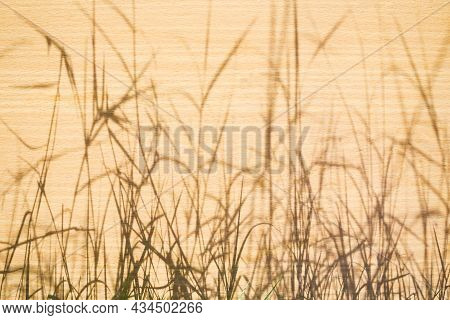 Shadow Leaves Grass From Light Day On Wood Background. New Modern Design Backdrop Out Door. For Add