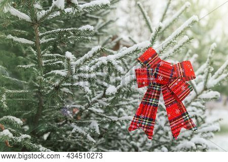 New Year Decoration Red Big Bow On A Snow-covered Branch. Christmas Tree Toy On The Branches Of A Fi