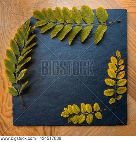 4 Acacia Twigs Green, Turning Yellow, Leaves, Frame On Black Square Sheet Of Stone Slate, Yellow Woo