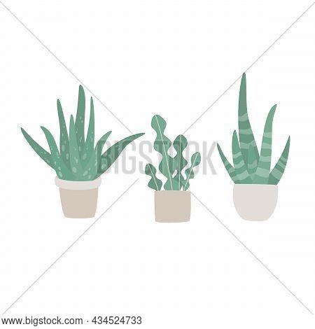Hand Drawn Set Of Cute Aloe Vera Plants Growing In Pots. Aloe In Pots. Houseplant Flower Pot Vector