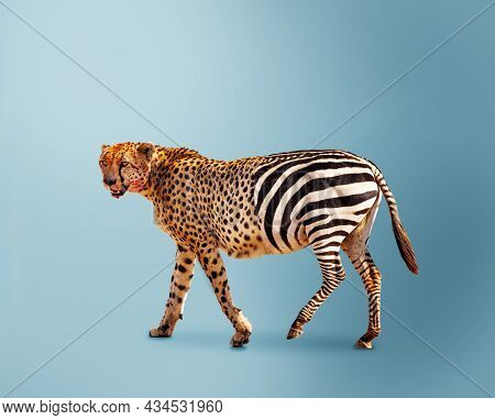 Half Cheetah Partially Zebra Predator Vs Herbivore