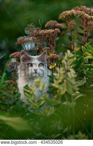 Kitten Sitting In Flowers. Cat Sits In The Garden Of Green Lawn. Cat Sits In The Garden Next To Bloo