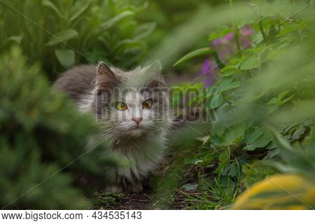 Cat Is Lying In The Garden. Atmospheric Moment At Nature Outdoor. Young Cat Walks And Enjoying A Bea