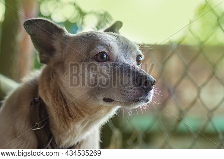 Dirty Dog In The Meadow. Attractive Dog Relaxing Outside In Garden. Cheerful Dog In Spring.