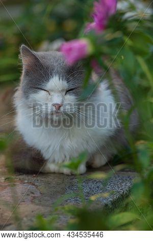 Happy Cat In The Field In Samer Time Season. Cat Relaxing In A Meadow