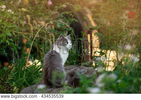 Portrait Of Happy Young Cat On Nature. Gray Fluffy Cat Is Sitting In The Garden. Long Hair Cat Model