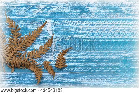 Leaves Of A Fern. Dry Leaves On A Blue Tree. Dried Grass On A Blue Background.