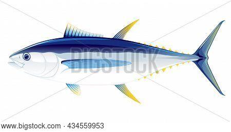 Bigeye Tuna Fish In Side View Illustration