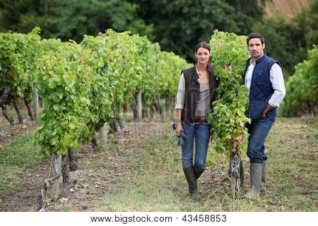 Couple posing in a vineyard