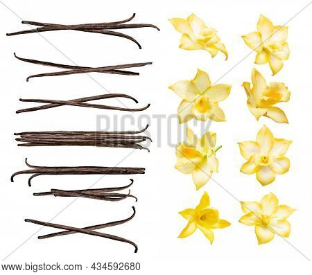 Vanilla pods and flowers set isolated on the white background. Collection of vanilla orhid flowers and vanilla sticks.