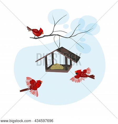 Bird Feeders Isolated On A White Background. Feeding Birds In Winter. Birds Fly To Food. Red Cardina