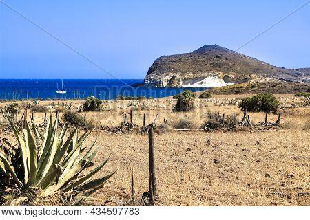 Flock Of Sheep Grazing In The Bush In Genoveses Beach In Cabo De Gata, Almeria, Spain