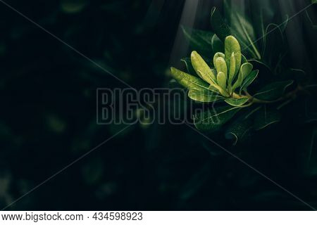 Beautiful Green Leaves With Sun Rays Close-up Against A Garden Background