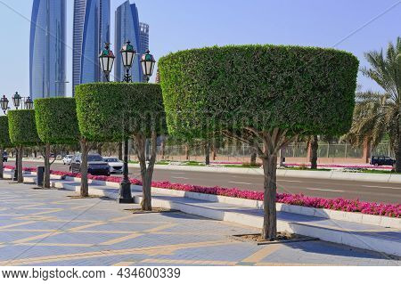Shaped Trimmed Ornamental Topiary Trees Alley Along Road Walkway In Abu Dhabi, Uae.walkway With Lush