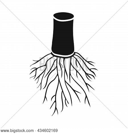 Vector Design Of Root And Cane Sign. Web Element Of Root And Sugar Vector Icon For Stock.