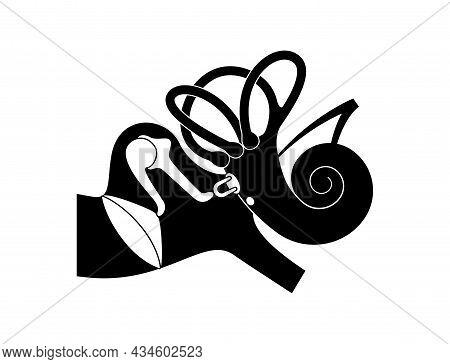 Inner Ear Anatomy Concept. Vestibular Apparatus, Semicircular Canals And Cochlea. Tympanic Membrane,