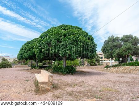 Garden In The Torre Del Moro Or Cabo Cervera In Cabo Cervera In Torrevieja, Alicante. Valencian Comm