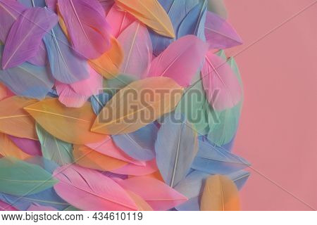 Feathers Multicolored In Pastel Colors On A Pink Background. Feathers Texture. Pink, Mint, Blue And