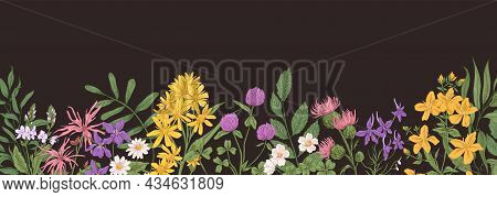 Wild Flower Border. Botanical Banner With Field Floral Plants. Horizontal Background With Herbs And