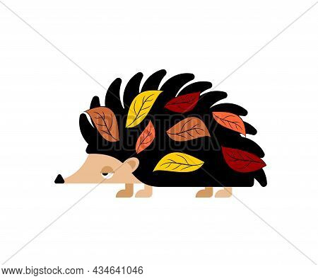 Hedgehog With Leaves Isolated. Small Animal With Needles On Its Body.