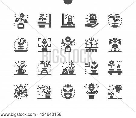 Flowers In Pots. Botany And Flora. Decorative Plant In House. Leaf, Gardening And Growing. Small Flo