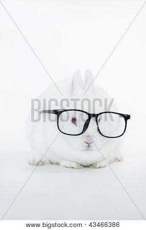 White bunny wearing human glasses on white background